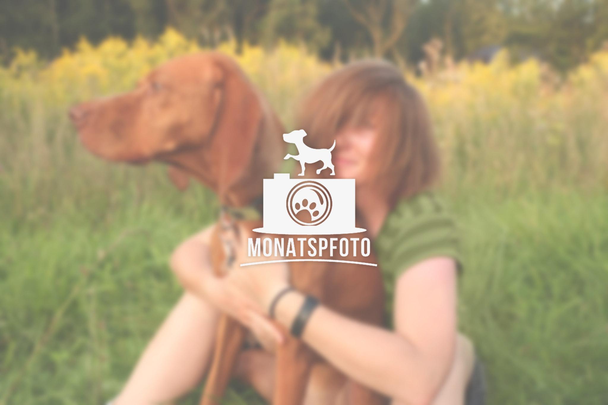 monatspfoto_teaser_08-2015